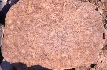 Vue d'ensemble d'une dalle de granite orbiculaire de Ploumanach
