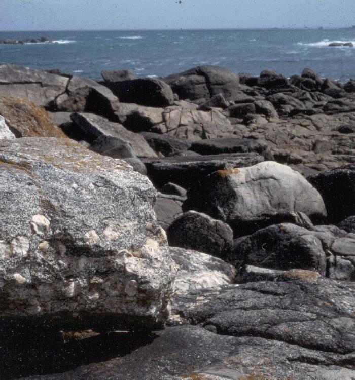 Granite de Porspoder: toit du filon de granite orbiculaire