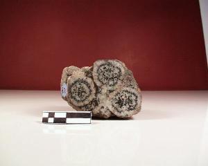 Gabbro orbiculaire corse (diorite orbiculaire)