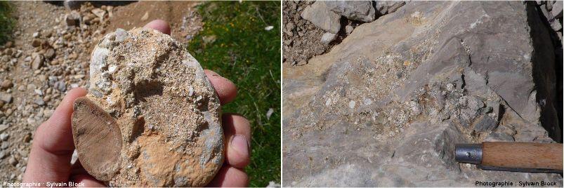 Galets cimentés sur le calcaire Sénonien, en route vers l'Obiou, massif du Dévoluy, Hautes-Alpes