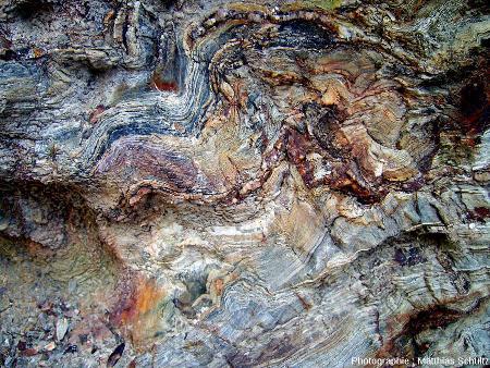 Détail d'un affleurement de phyllades de la presqu'ile de Giens