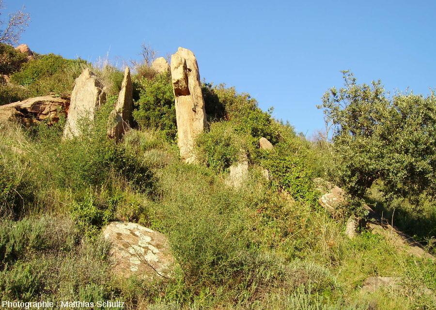 Les gneiss de Bormes à proximité de la chapelle Notre Dame de Constance au-dessus de Bormes-les-Mimosas