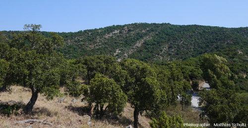 Les gneiss de Bormes au niveau du col de Caguo-Ven, commune de Bormes-les-Mimosas
