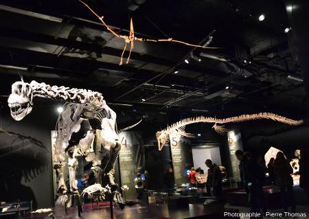 Un dinosaure (à gauche), un ptérosaure (au centre, en haut) et un mosasaure (à droite): échantillons majeurs (du moins en taille) des collections de sciences de la Terre au Musée des Confluences de Lyon