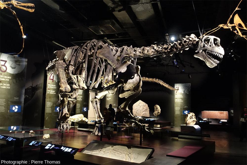 Une partie du plateau des reptiles du Musée des Confluences, avec le fameux Camarasaurus