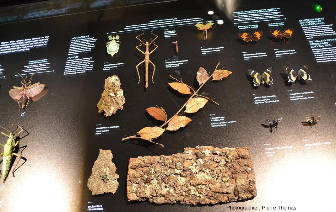 Les insectes actuels, témoins de l'Évolution et de ses mécanismes
