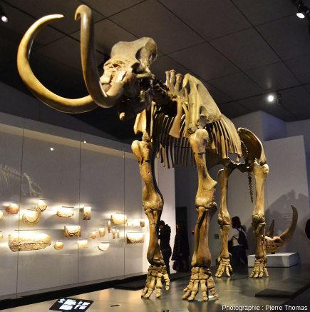Le mammouth de Choulans, témoin de la vie locale lyonnaise pendant la période glaciaire, il y a 20000 ans
