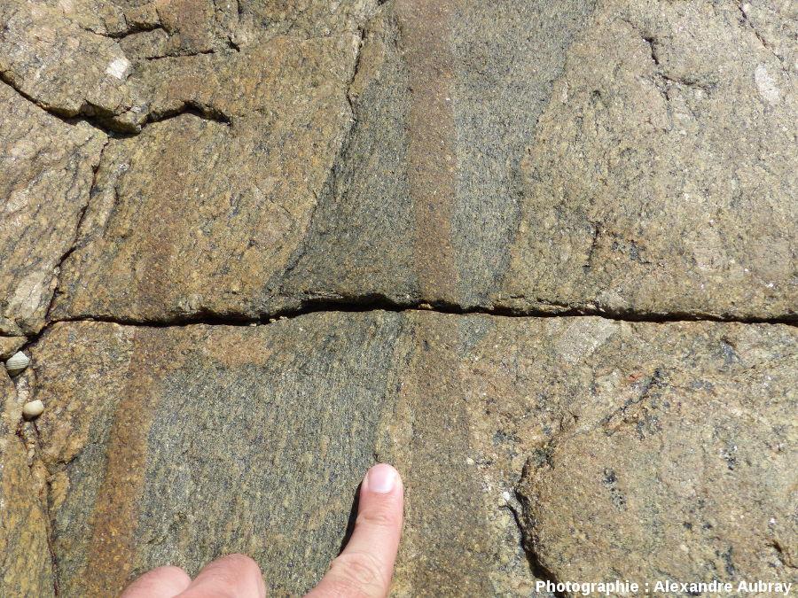 Gneiss amphiboliques et orthogneiss recoupés par des filons de microgranodiorite, Port-Béni (Côtes d'Armor)
