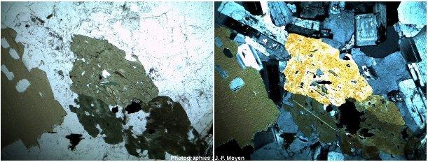 Granites de zone de subduction (type ACG), à biotite et hornblende, microscope polarisant
