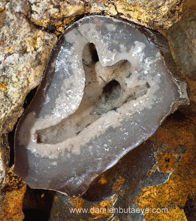 Géode interne à un galet de silex et présentée comme un fossile de corail branchu
