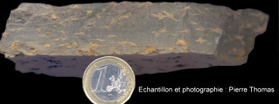Vue par la tranche de l'échantillon d'argilite