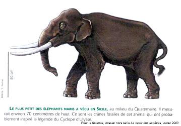 Représentation du plus petit des éléphants nains qui a vécu en Sicile