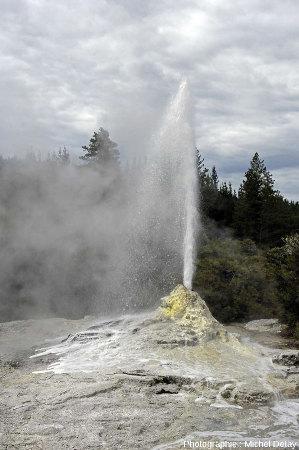 Le geyser Lady Knox, Nouvelle-Zélande