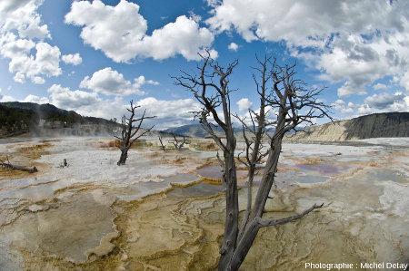 Vue d'une partie du site de Mammoth Hot Spring, Parc national de Yellowstone, États-Unis