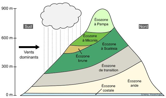 Le modèle d'étagement des zones de végétation sur une ile des Galapagos