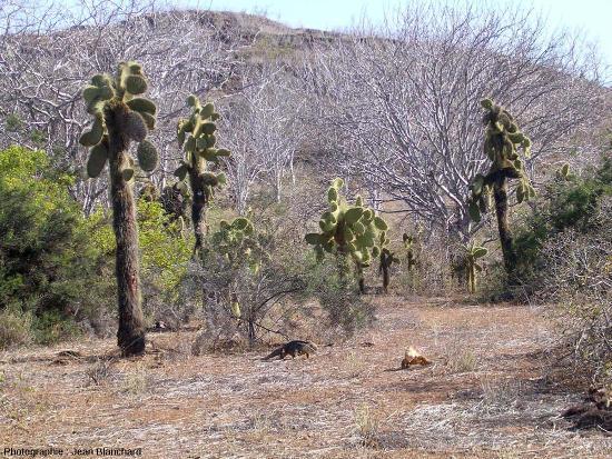 Zone aride sur l'ile Isabella