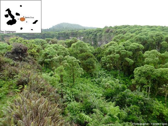 Zone à Scalesia sur l'ile Santa Cruz
