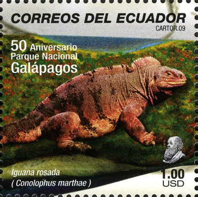 Conolophus marthae, iguane rose du volcan Wolf de l'ile Isabela, représenté sur un timbre d'Équateur