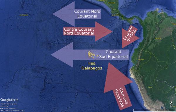 Courants marins superficiels baignant les Galapagos dans le Pacifique Est