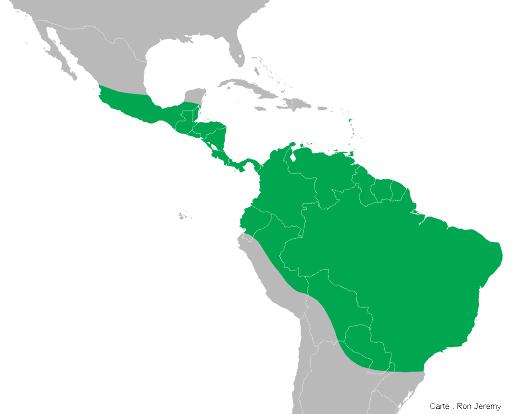 Aire de répartition actuelle de l'iguane vert en Amérique centrale et en Amérique du Sud