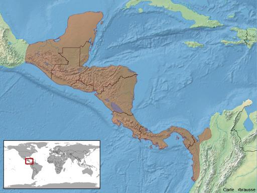 Aire de répartition actuelle du genre Ctenosaura en Amérique centrale et en Amérique du Sud