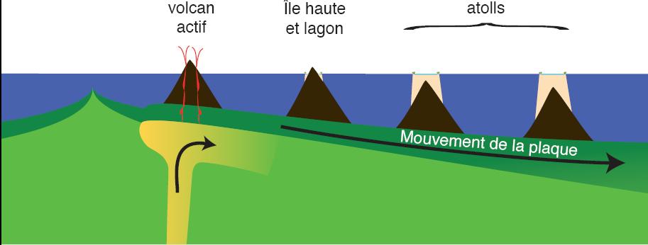 Schéma expliquant la formation des atolls par croissance de coraux sur des îles volcaniques qui s'enfoncent par subsidence