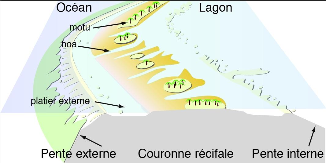 Structure de la barrière d'un atoll