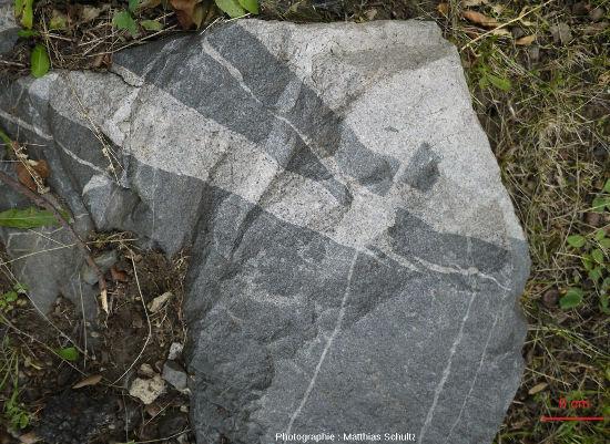 Filon de roche magmatique claire s'injectant dans un encaissant magmatique plus sombre et en détachant des enclaves, Mont Royal (Québec, Canada)