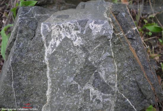 Filon de roche magmatique gris clair s'injectant dans un encaissant magmatique plus sombre et en détachant des enclaves, Mont Royal (Montréal)