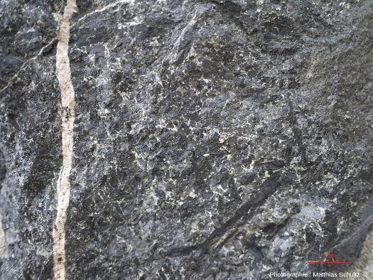 Détail d'un gabbro mélanocrate recoupé par un filon vertical plus clair, Mont Royal, Montréal (Québec, Canada)