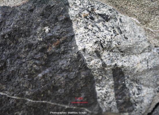 Détail du contact entre un gabbro mélanocrate et un filon de roche magmatique plus acide (roche plus claire à droite: diorite?), Mont Royal (Montréal)