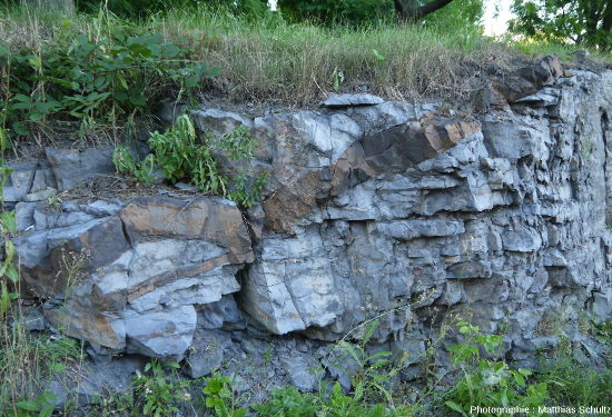 Calcaires denses, gris-bleus, alternant avec de fins niveaux plus argileux et recoupés par un filon de roche basique, Mont Royal, Montréal (Québec, Canada)