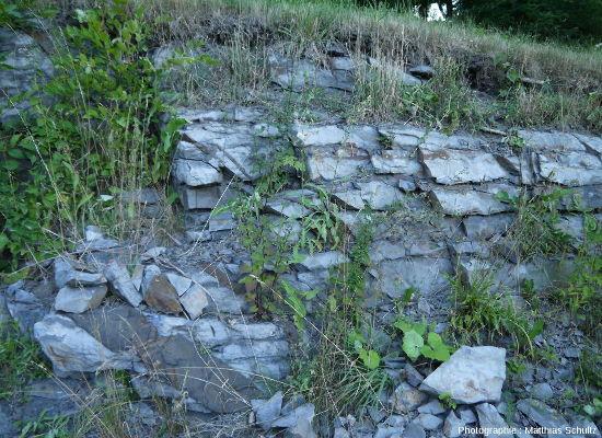 Calcaires denses, gris-bleus, alternant avec de fins niveaux plus argileux et recoupés par des filons de gabbro, Mont Royal, Montréal (Québec, Canada)