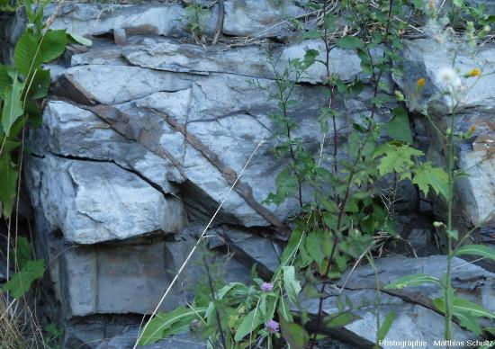 Détail de la figure ci-dessus montrant des filons très fins dans les calcaires du groupe de Trenton, à la surface altérée, en partie mis en relief par l'érosion, Mont Royal (Montréal)