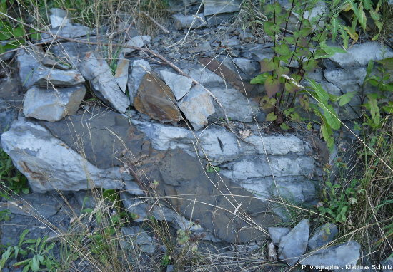 Détail de la figure ci-dessus montrant des filons plus épais dans les calcaires du groupe de Trenton, Mont Royal (Montréal)