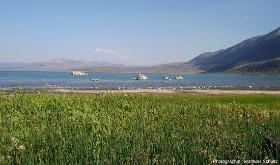 Rives verdoyantes du lac Mono avec tufas émergés, Grand Bassin, Californie