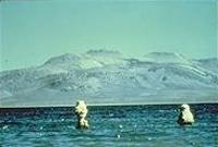 Des tufas du lac Mono tels que visibles en 1962