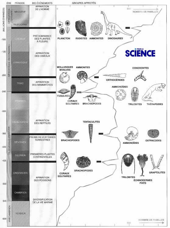 Les crises biologiques au cours du Phanérozoïque