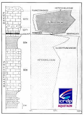 Répartition des Foraminifères planctoniques, benthiques et remaniés sur la coupe de Bidart