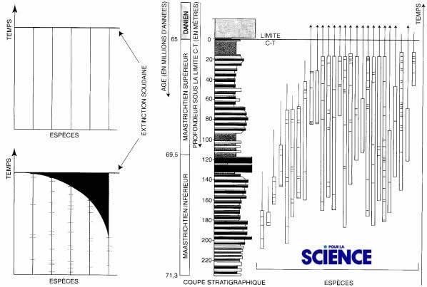 Modèles d'extinction et exemples des ammonites en baie de Biscaye à la limite K-T