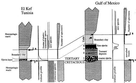 Comparaison de l'enregistrement des événement de la limite K-T au niveau d'un site distal (El Kef) et proximal (Golfe du Mexique)