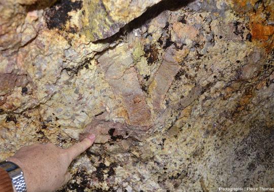 Grands cristaux de pétalite (LiAlSi4O10) dans une pegmatite du Limousin