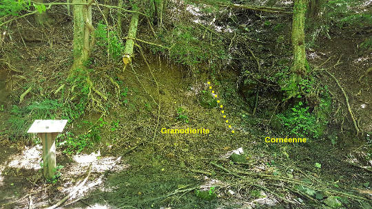 Contact (en tiretés) entre la granodiorite du Hohwald et les cornéennes