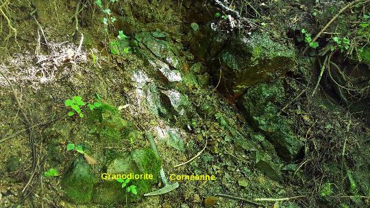 Zoom sur le contact entre la granodiorite du Hohwald et les cornéennes