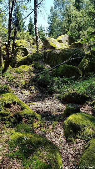 Chaos granitique du Rocher du Loup (leucogranite de Kagenfels)