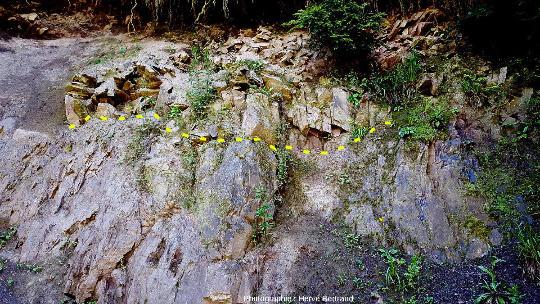Contact de la rhyolite du Nideck (Permien inférieur) sur les schistes de Steige (Ordovicien/Silurien), à Eftermatten