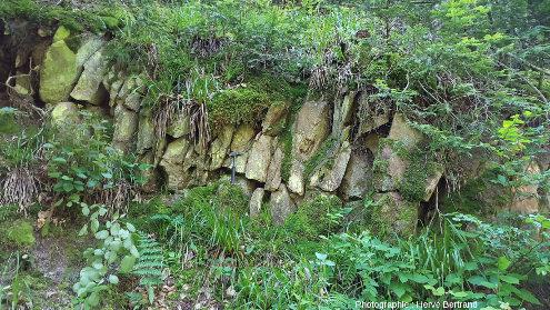 Épanchement de la rhyolite du Nideck, montrant une prismation sub-verticale fruste, à Eftermatten