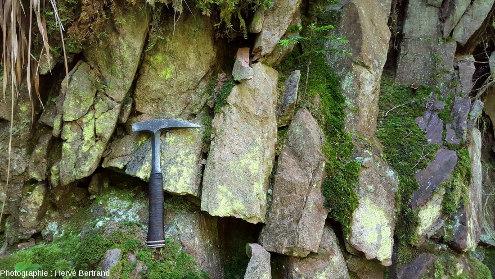 Épanchement de la rhyolite du Nideck, montrant une prismation sub-verticale frustre, à Eftermatten