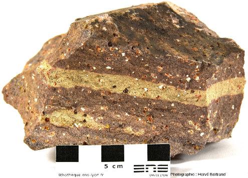 Rhyolite du Nideck, à phénocristaux de feldspaths (clairs) et de quartz (sombres)