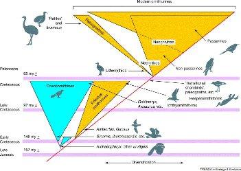 Scénario de diversification du groupe des oiseaux